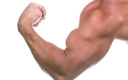 photo-muscle-255x160